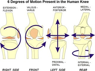 Knee | Medowie Physio | Mike Paterson