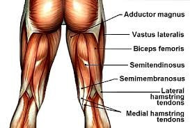 Medowie Physio | Hamstring Sprains | Mike Paterson