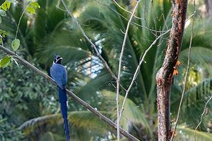 Birds (1 von 1).jpg