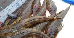What a catch! | Mr Flathead Fishing