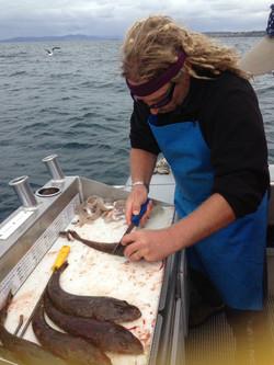Mr Flathead himself!  Cleaning fish.