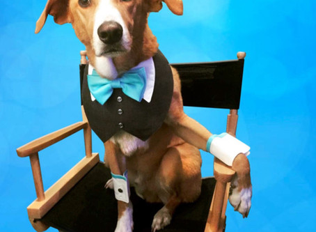 "National Stunt Dog Champion Cast as Lead Canine ""Jack"" in Family-Friendly Feature Film!"