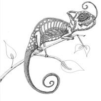 chameleon print.jpg