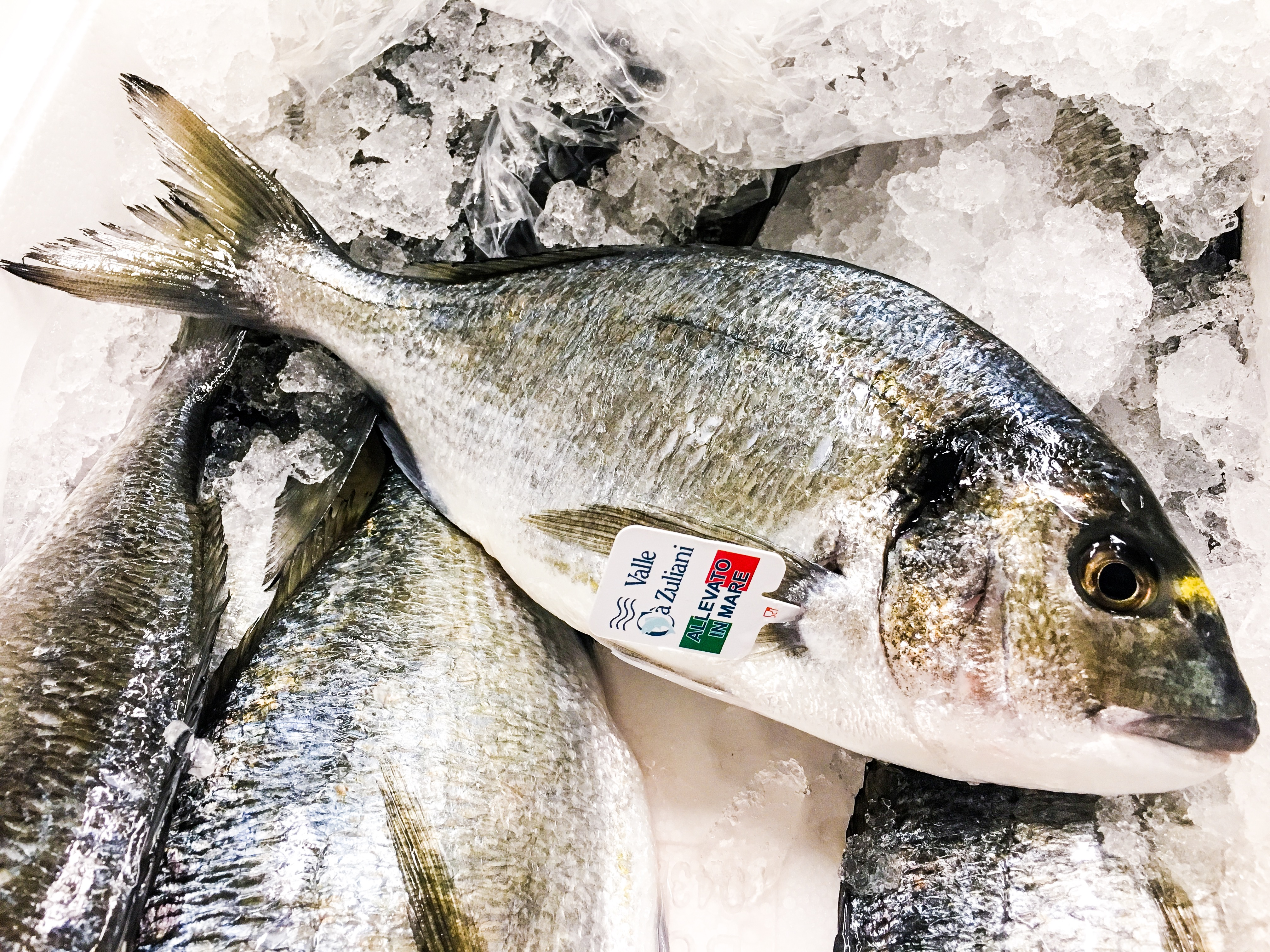 seafood-restaurant-budapest-bottega-di-brontolo (9)