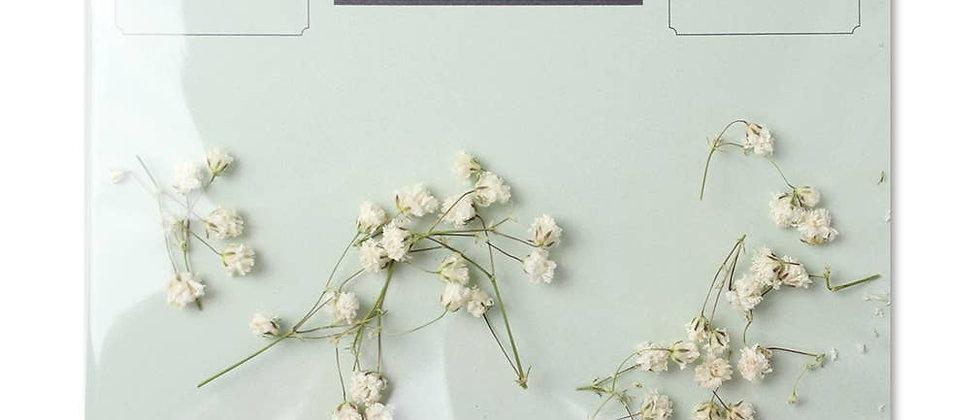 Flowergram - Baby's Breath