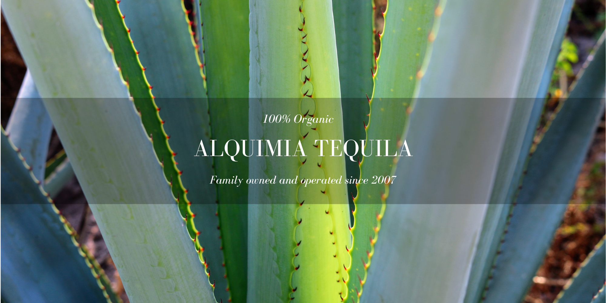 Virtual Alquimia Tequila Tastings Online