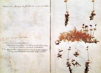 Écriture de la nature, sciences et mathesis