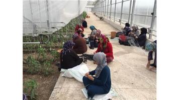 BM Gıda ve Tarım Örgütü Türkiye'ye sığınan Suriyeli mültecilere serada sebze üretimi eğitimine başla