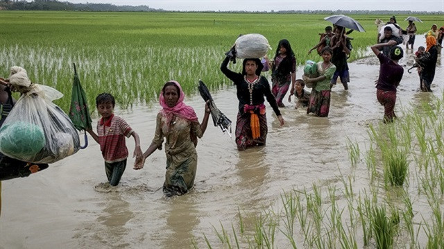 Rohingya Muslims, fled from ongoing military operations in Myanmar's Rakhine state, make their way through water at rice field as they try to arrive Cittiagong, Bangladesh on August 31, 2017