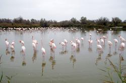 parc ornithologique stes maries-022