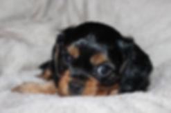 irma's-Cheerfull-Beauties-Faith-Pup.besc