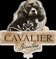 Cavalier-Beauties.nl-Kleinschalige-Fokker FB.png
