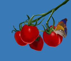 tomatoes + butterfly