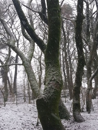 Moss and snow trunks, grinlow.jpg