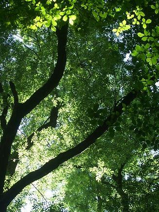 Grinlow woods.jpg