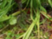 Low Trowel 14.jpg