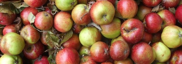 Apple Day invitations