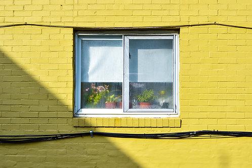 Bloomfield Window Print
