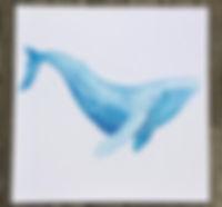 500x500 Whale.jpg