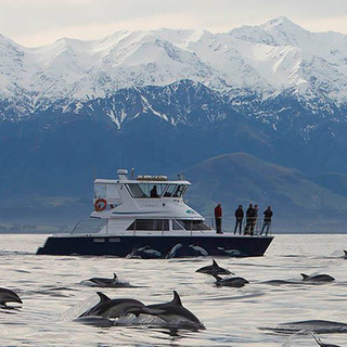 Kaikoura Dolphin Encounter