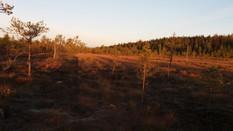 Marttilan koulu visits Paukaneva swamp