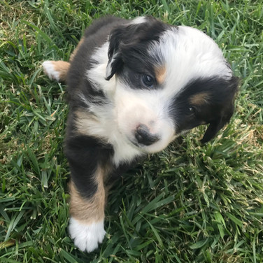 Lucy~Week 5