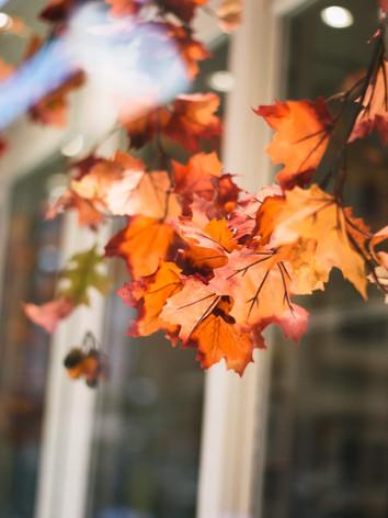 ThomasGlover_18_Autumn-2.jpg