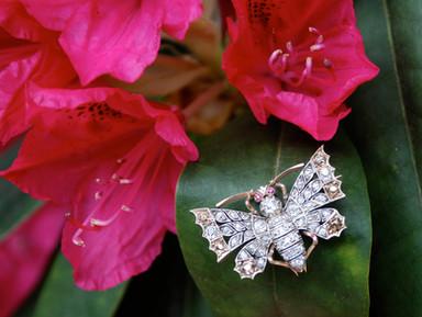 Diamond Butterfly Brooch.jpg