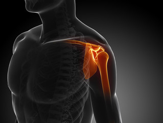 What is the Rotator Cuff ?