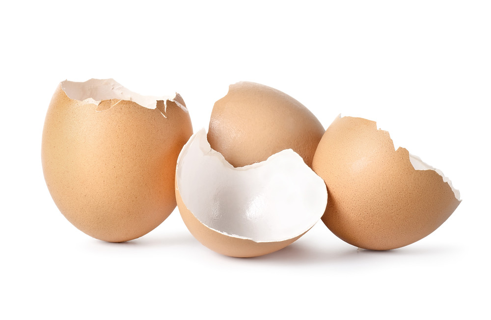 Picture of broken egg shells. Represents the need for family therapy katy, tx 77494. Also represents the need for family counseling katy, tx 77494.