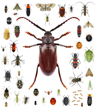 Set of insects isolated on a white backg