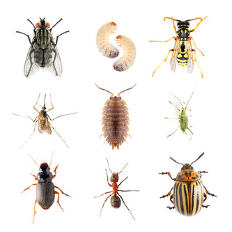 Garden pests. Collection of the insects