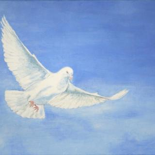 Morning Dove - 2hr.jpg