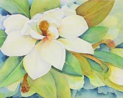 WC Magnolia - Specialty
