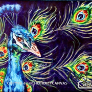 Blue Peacock - 2hr.JPG