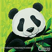 Panda Bear - 2hr.jpg
