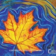 Floating Maple Leaf