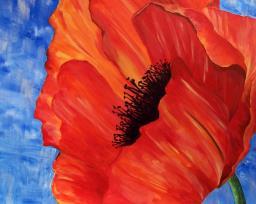 2 Hour - Summer Poppy