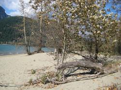 Kilby Beach