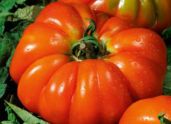 Marinade-Tomate 'Delizia'