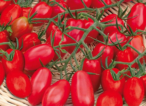 Pflaumen-Cherrytomate 'Cupido'