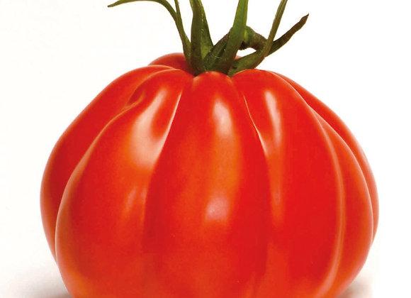 Ochsenherz-Tomate 'Corazon'