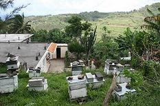 Rural habitation bee keeping. Petit Gabriel.