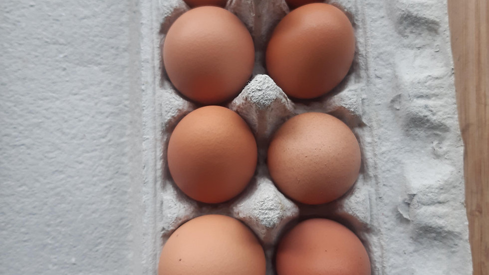 Pastured eggs 1 dozen