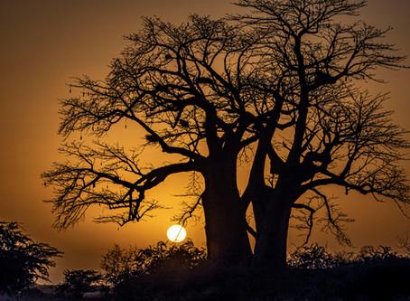 Baobabs y bicicletas