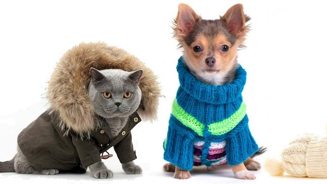 Frente fria chegando: como preparar a casa para os pets?