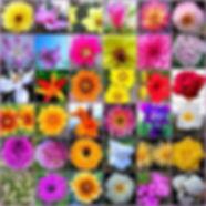 flore de bach mostoles madrid pedro clemente