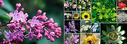 esencias florales bach mediterráneo móstoles madrid pedro clemente