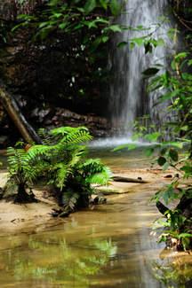 Strumyk w dżungli Borneo