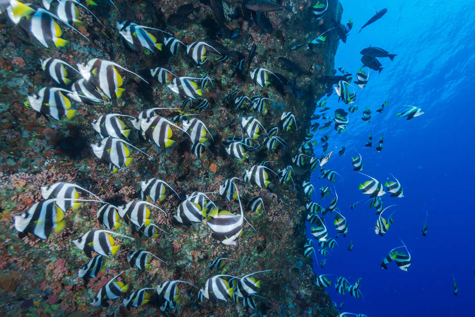 Rafa Koralowa, Borneo